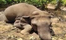 Elaphant-death in Jharkhand